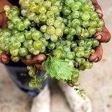 Grapes from Klaas Voogds