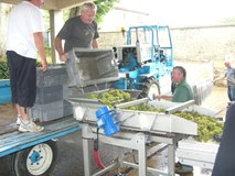 ABFW Visit - Sorting of the harvested grapes