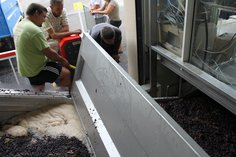 Unloading, cleaning and juicing the grapes - Sept 2016