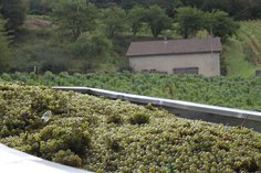 A trailer of Pouilly Fuissé arriving at the cellar in Sept 2016