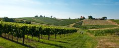 Vineyards of Domaine Tastet