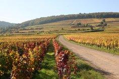 Vineyards at Marsannay