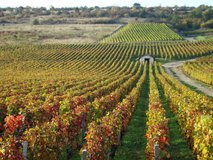Vineyards at Nuit-Saint-Georges