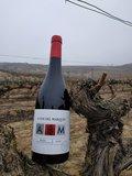 Young / Joven in vineyard