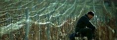 Tending the vines