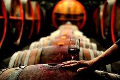 Wine glass on barrel