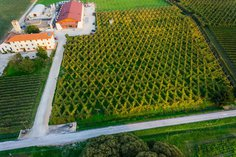 """Overhead view of """"Bellussera"""" planting and the winemaking facility"""