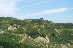Casetta vineyards