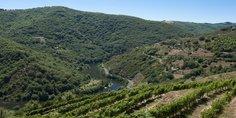 Cotes de Millau hillside