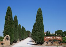 Tree lined entrance to the vineyard