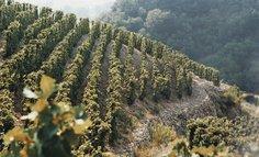 Cornas vineyard