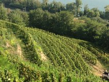 Vineyards of Hauts Chassis