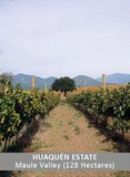 Huaquén Estate Vineyards