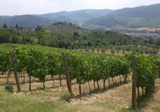 I Veroni hillside grapes
