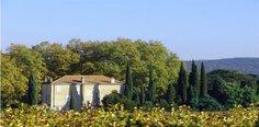 Fields around Château Minuty