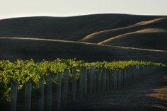 Hillside near the Winery