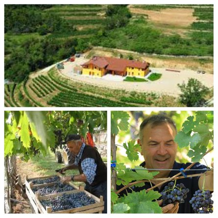Growers of the month - Portinari & Accordini