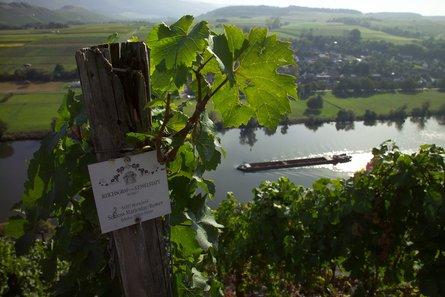 Weingut Reichsgraf von Kesselstatt - Vintage report 2019