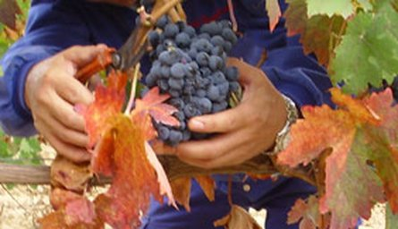Introducing our new Rioja Producer - Bodegas Cerrolaza